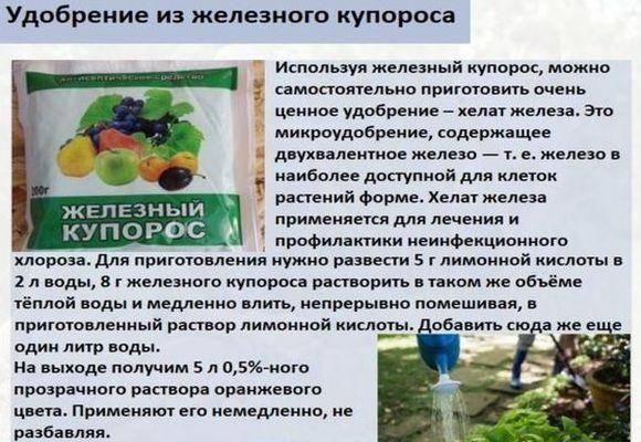 Как правильно развести железный купорос для обработки винограда летом, осенью и весной - всё про сады