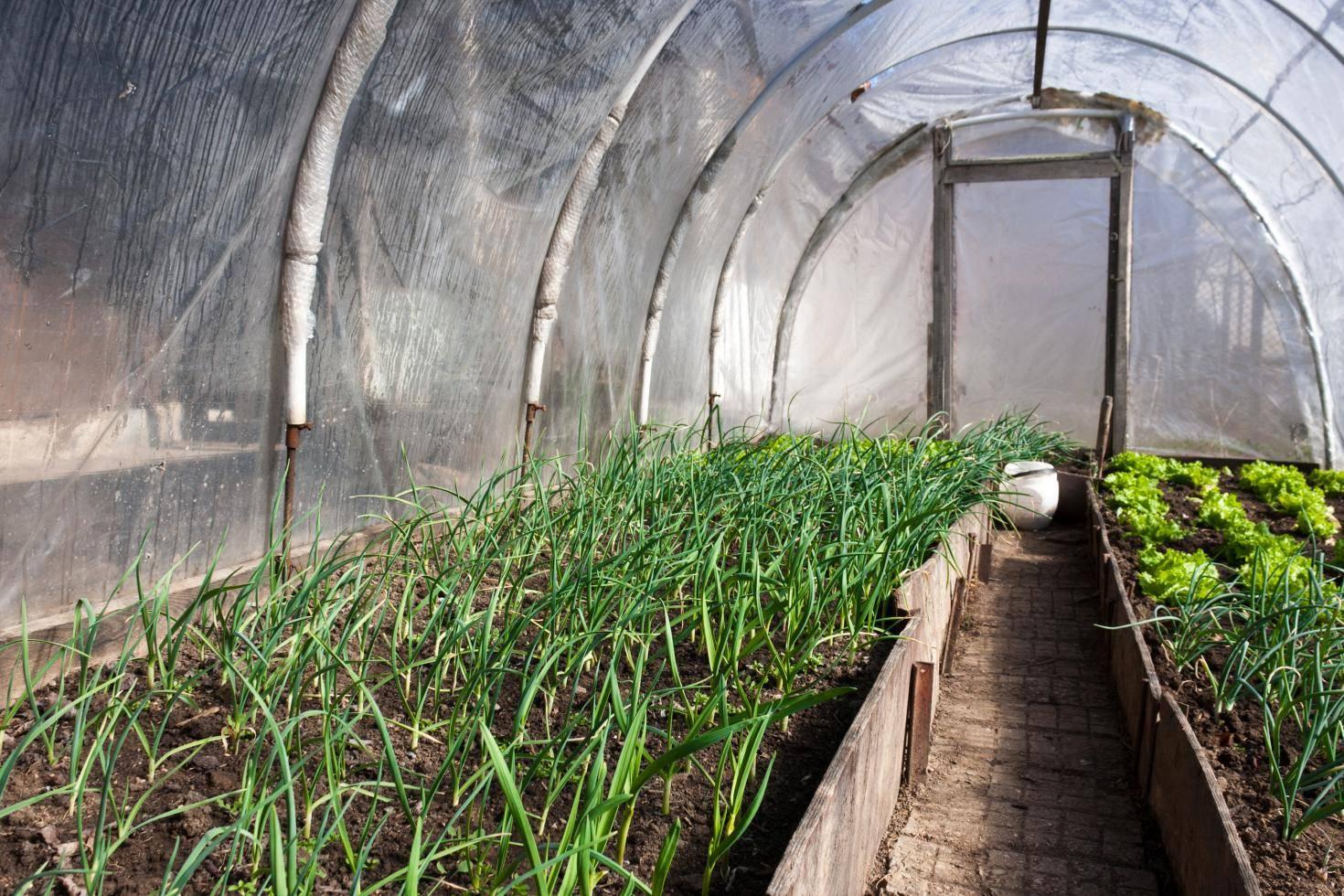 Овощи в теплице круглый год: как оборудовать теплицу и выращивать их зимой?