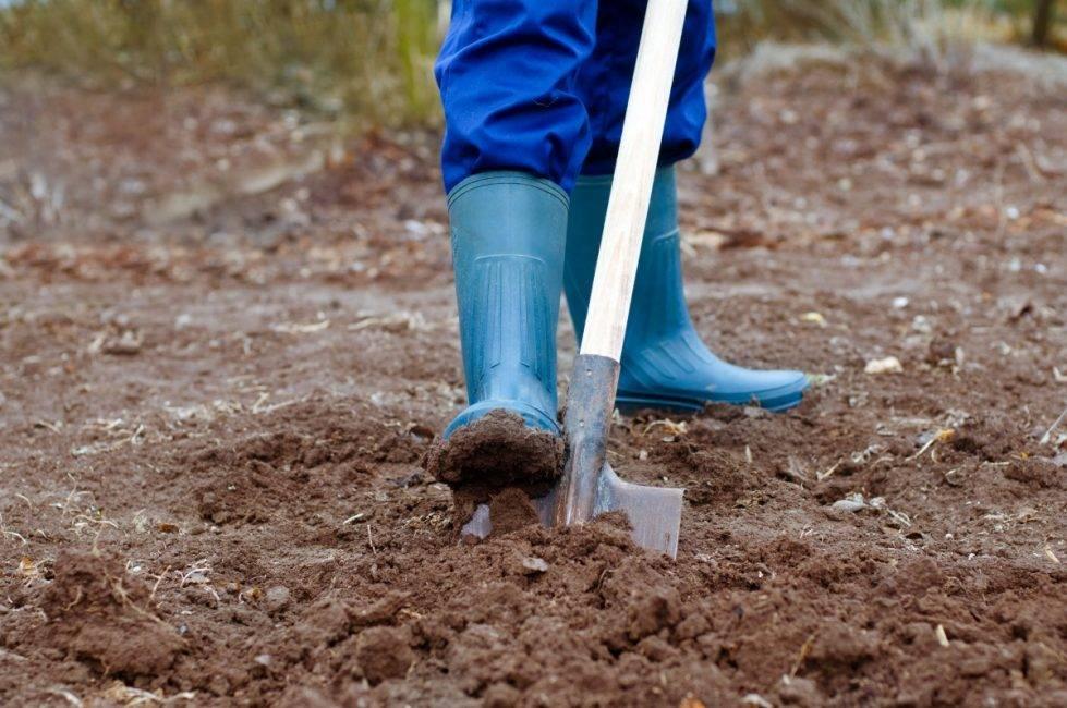 Копать огород правильно вручную осенью и весной, фото и видео