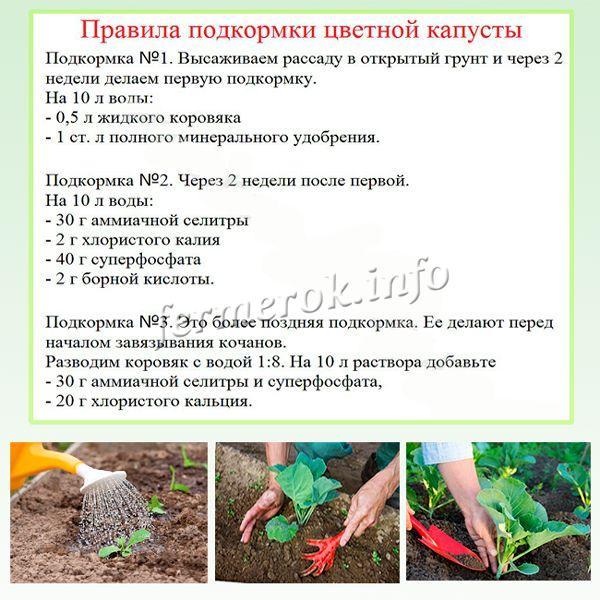Чем подкормить морковь в открытом грунте народными средствами?