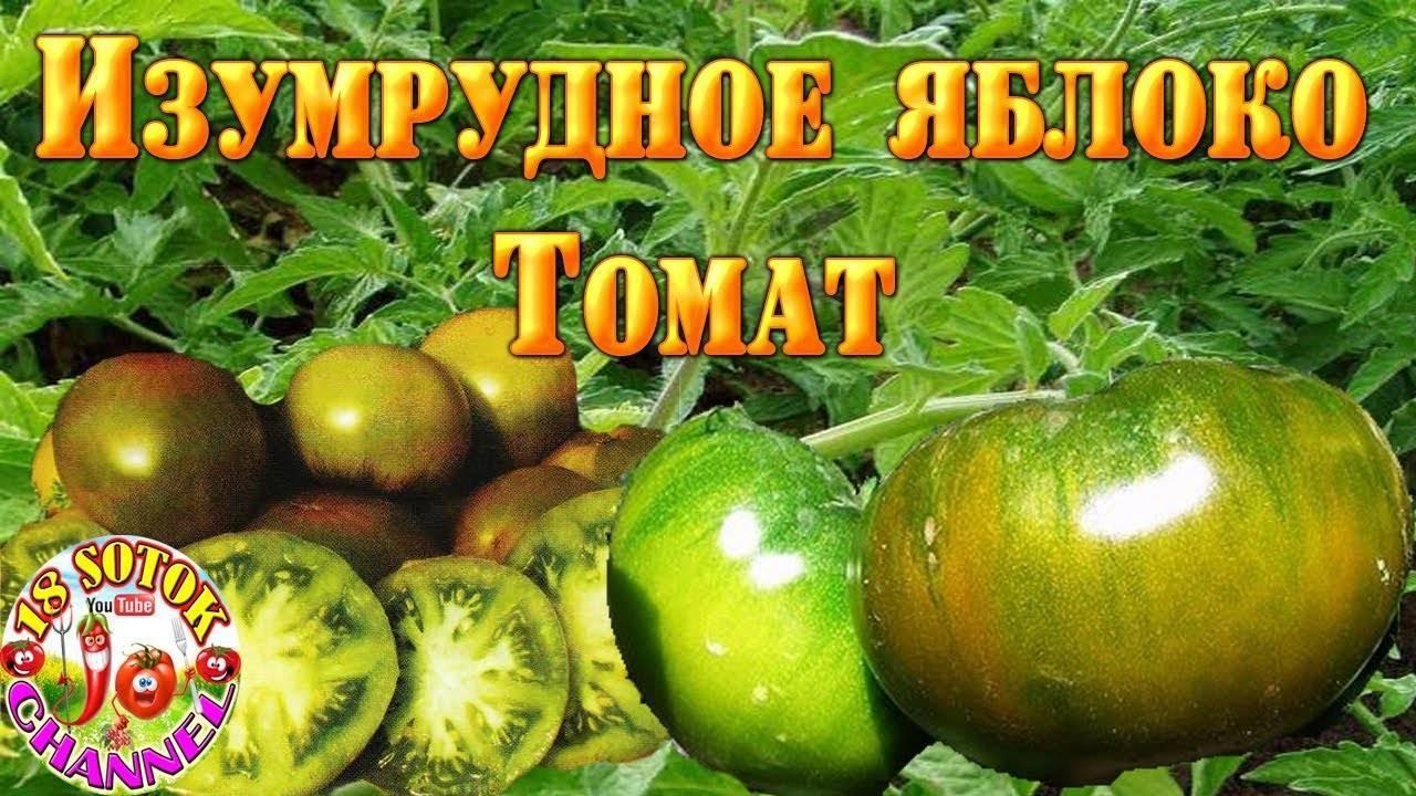 Сорта изумруд и изумрудное яблоко - дневник садовода semena-zdes.ru