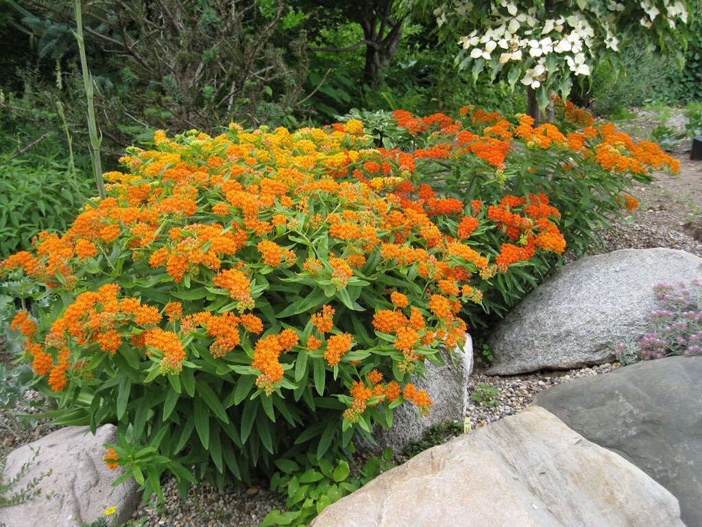 Лучшие сорта и виды многолетних цветов для урала, специфика выращивания