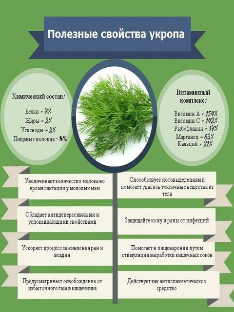 Семена укропа — полезные свойства и применение. как заваривать семена укропа - здоровье - медиаплатформа миртесен