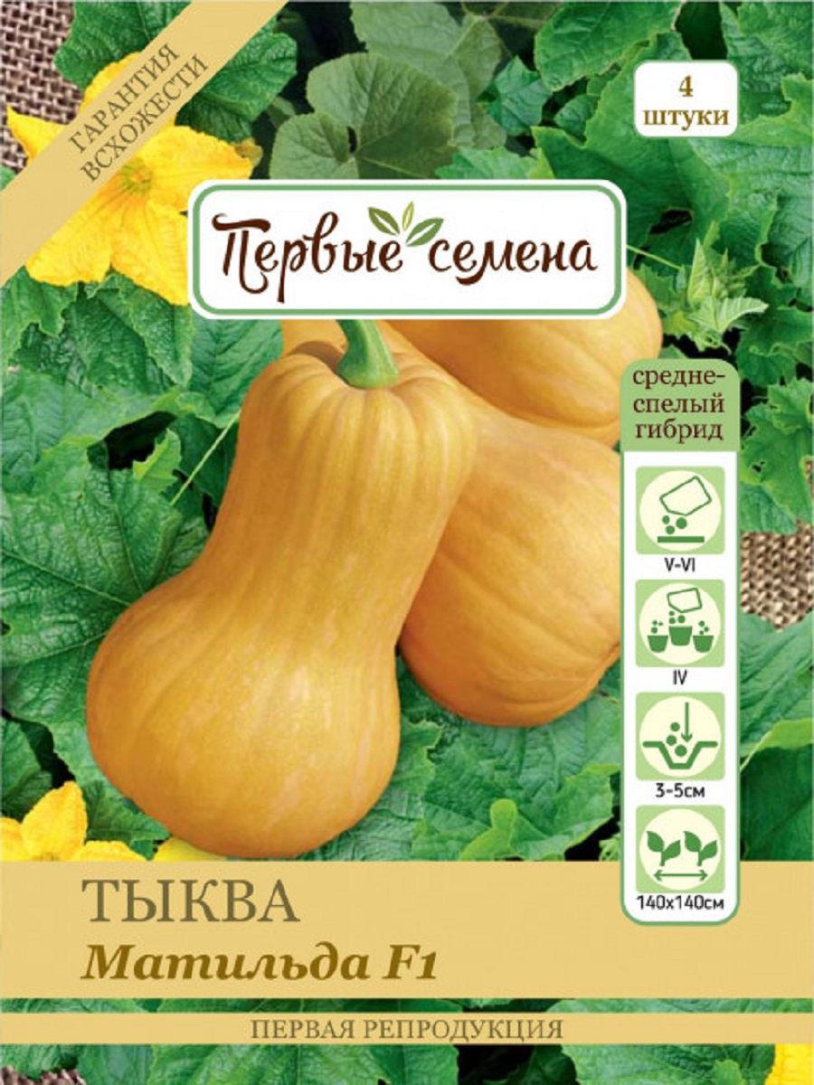 Все о тыкве баттернат (ореховая): описание сорта, выращивание, агротехника