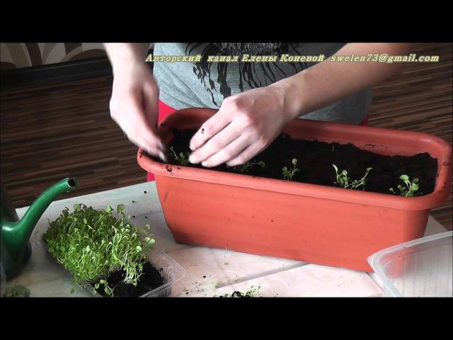 Весенняя посадка лобелии в кашпо: видео и пошаговая инструкция