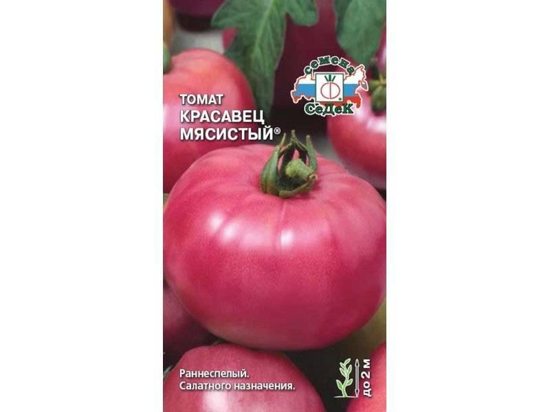 Томат красавец мясистый: описание, фото, отзывы, урожайность