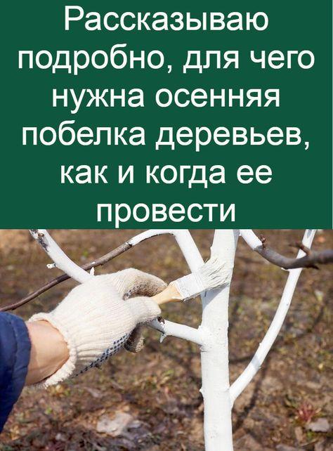 Подготовка и побелка садовых деревьев в весенний и осенний периоды