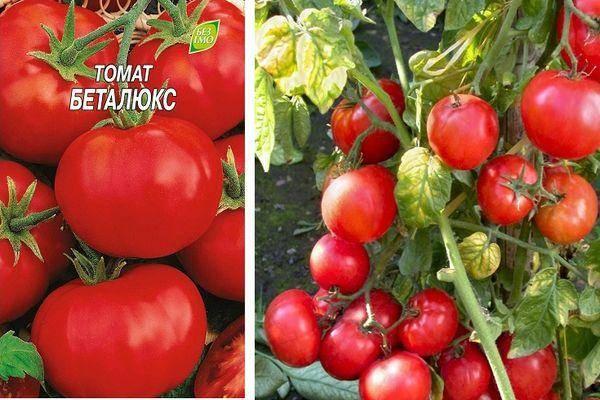 Томат беталюкс: описание и характеристика сорта, отзывы, фото | tomatland.ru