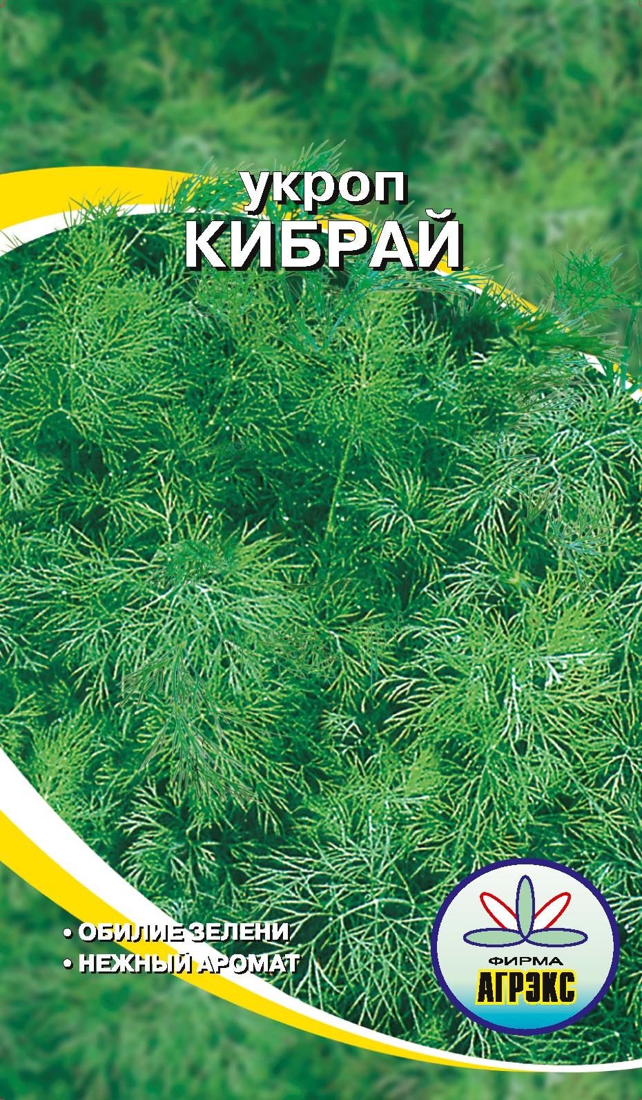 Укроп кибрай: реальные отзывы, топ секреты выращивания, фото