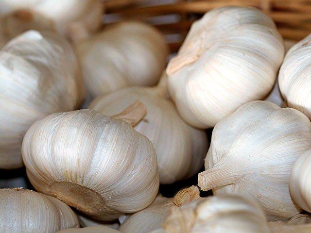 Топ-30 лучших сортов чеснока, их фото с описанием и помощь в выборе подходящего сорта