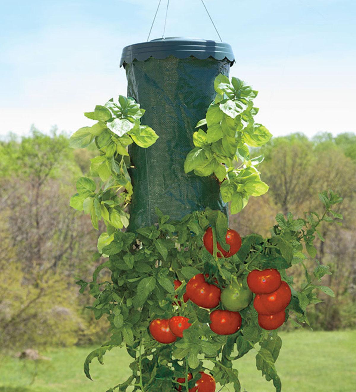 Выращивание помидоров вниз головой: увеличиваем урожай в 4 раза