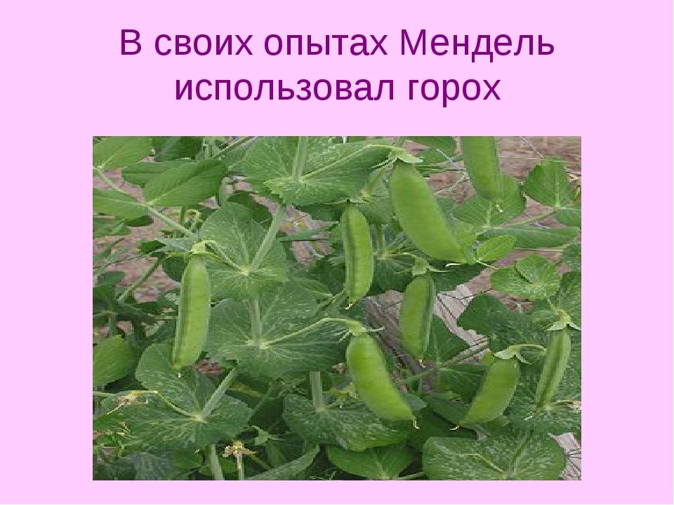 ᐉ горох обыкновенный (посевной) - полезные свойства, описание - roza-zanoza.ru