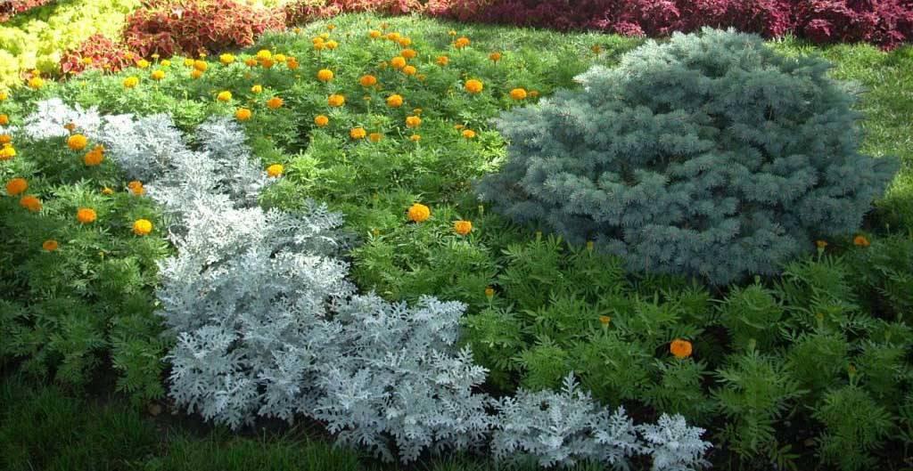 Бордюрные растения (68 фото): однолетние низкорослые цветы и кустарники, хризантемы и тюльпаны, желтые и белые цветы, посадка роз