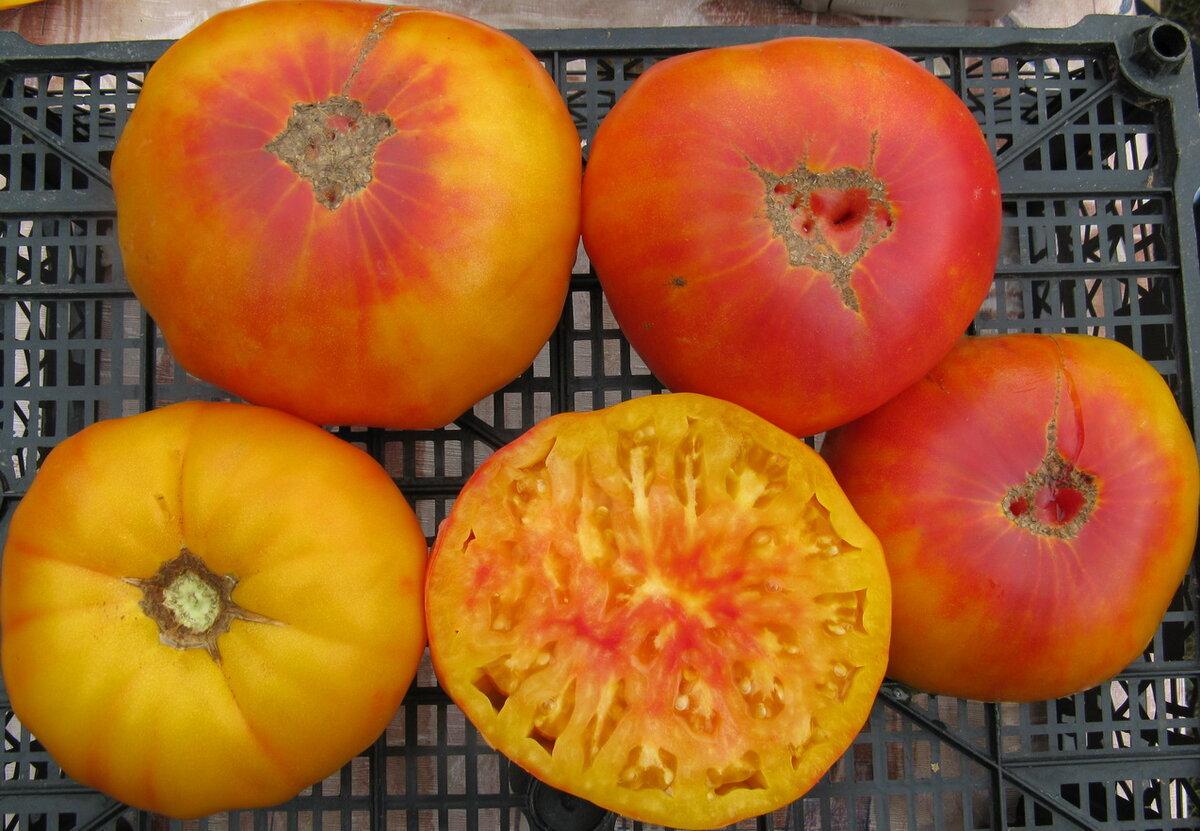 Описание сорта томата ананасный, особенности выращивания и ухода