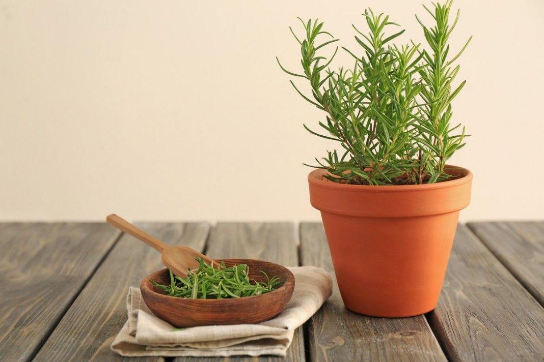 10 пряных трав, которые можно вырастить на подоконнике