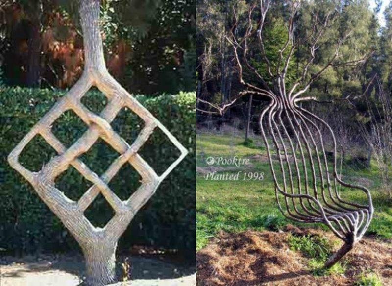Арбоскульптура для начинающих своими руками из ивы: фото, как сделать