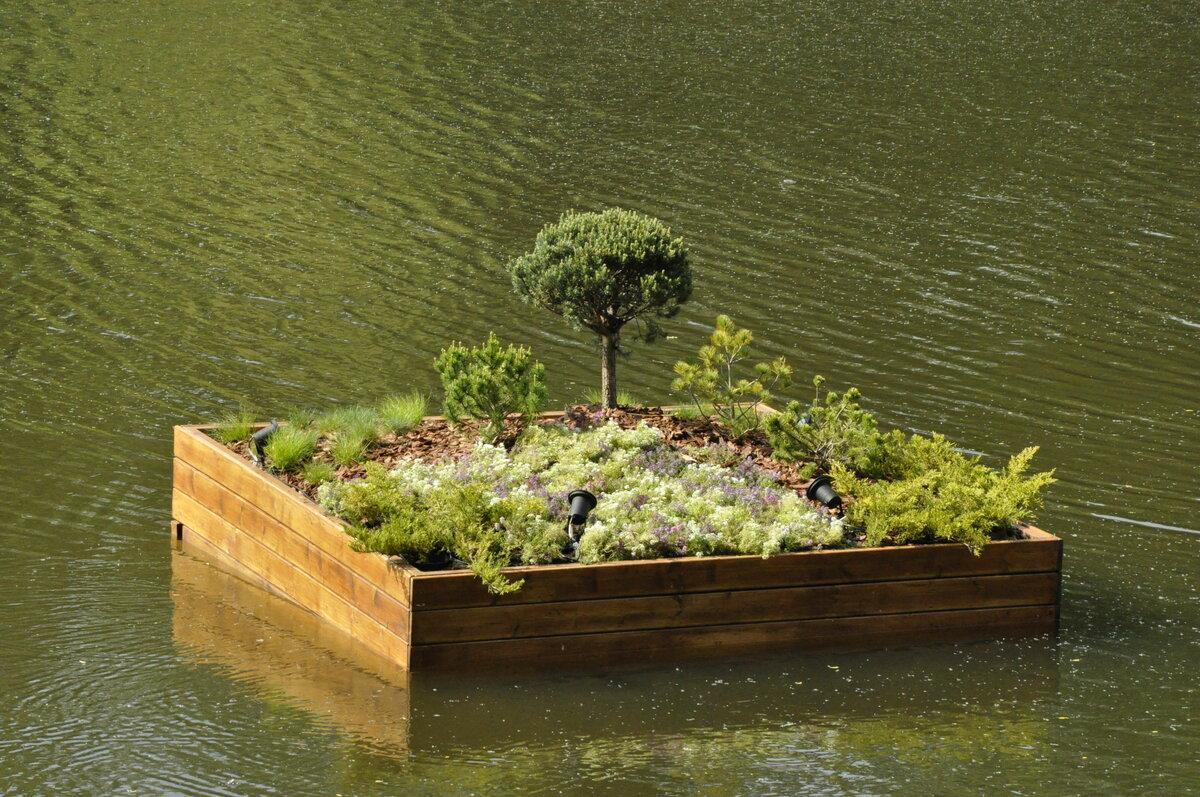 Растения для пруда — рассказываем в общих чертах