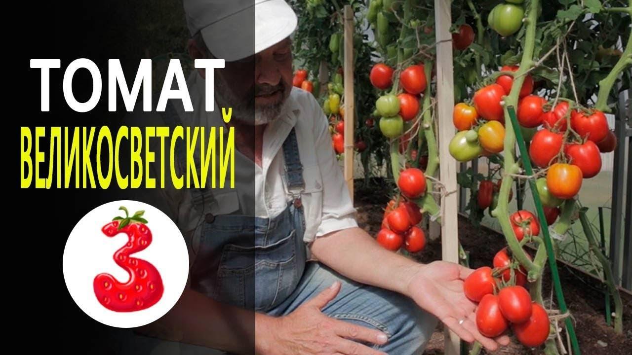 Томат великосветский: характеристика и описание сорта, фото, отзывы