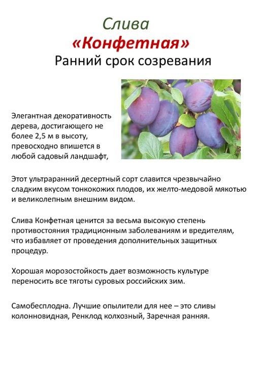 Слива заречная ранняя: описание сорта и характеристики, выращивание и уход с фото