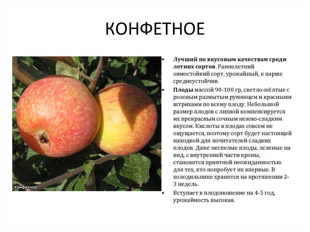 Яблоня «чемпион»: описание сорта, фото и отзывы