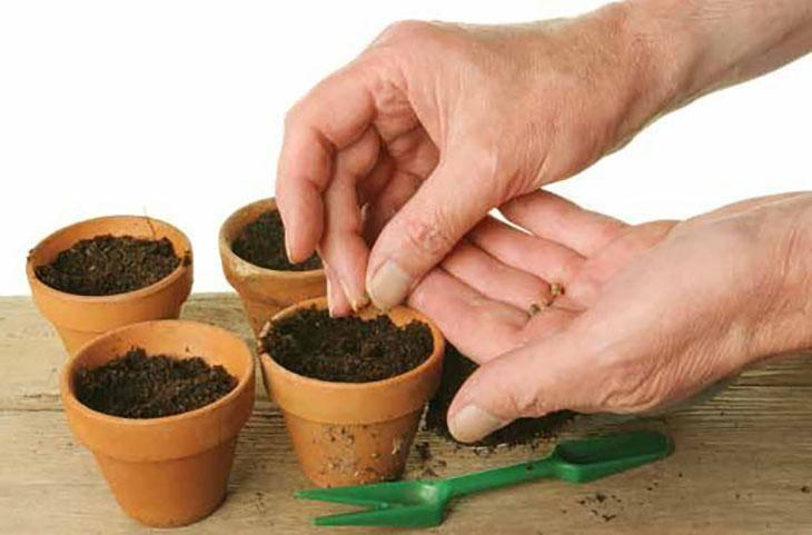 Брусника садовая: посадка, в том числе семенами, как подготовить почвогрунт самостоятельно