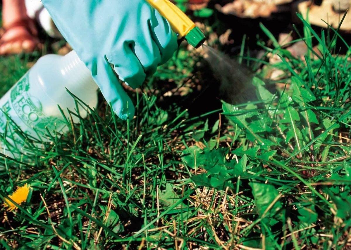 Корневищные сорняки: биологические особенности и меры борьбы