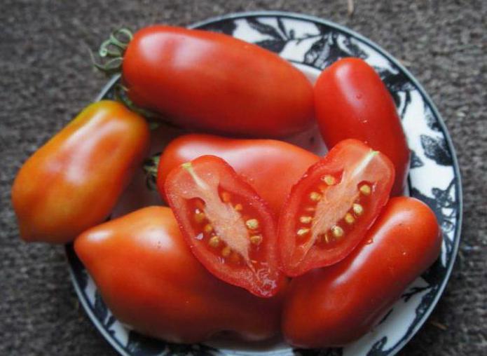 Выращивание томата дамские пальчики