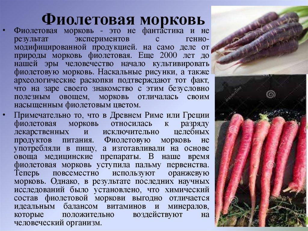 Фиолетовая морковь: описание, полезные свойства, применение, фото