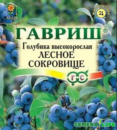 Размножение голубики, в том числе основные способы, а также особенности в проведения в беларуси