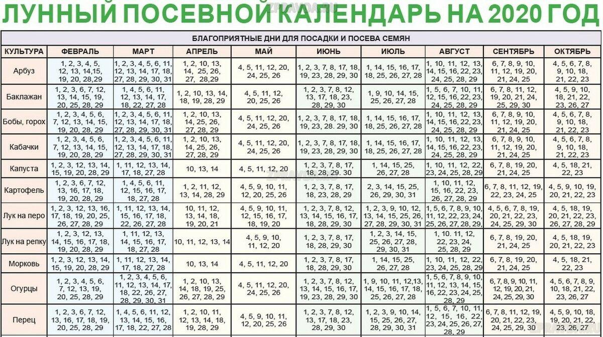 Когда сажать огурцы на рассаду в 2021 году по лунному календарю в средней полосе: таблица