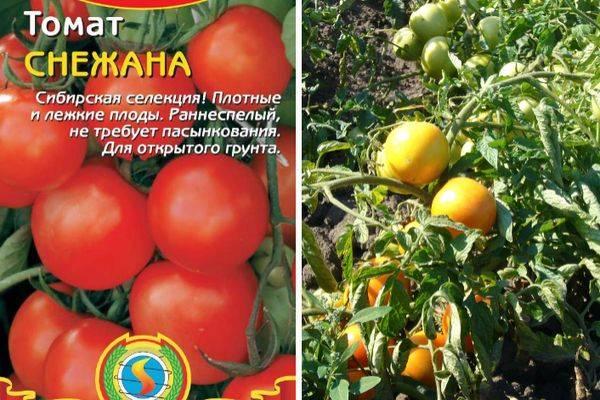 Описание томата Кмициц и самостоятельное выращивание сорта