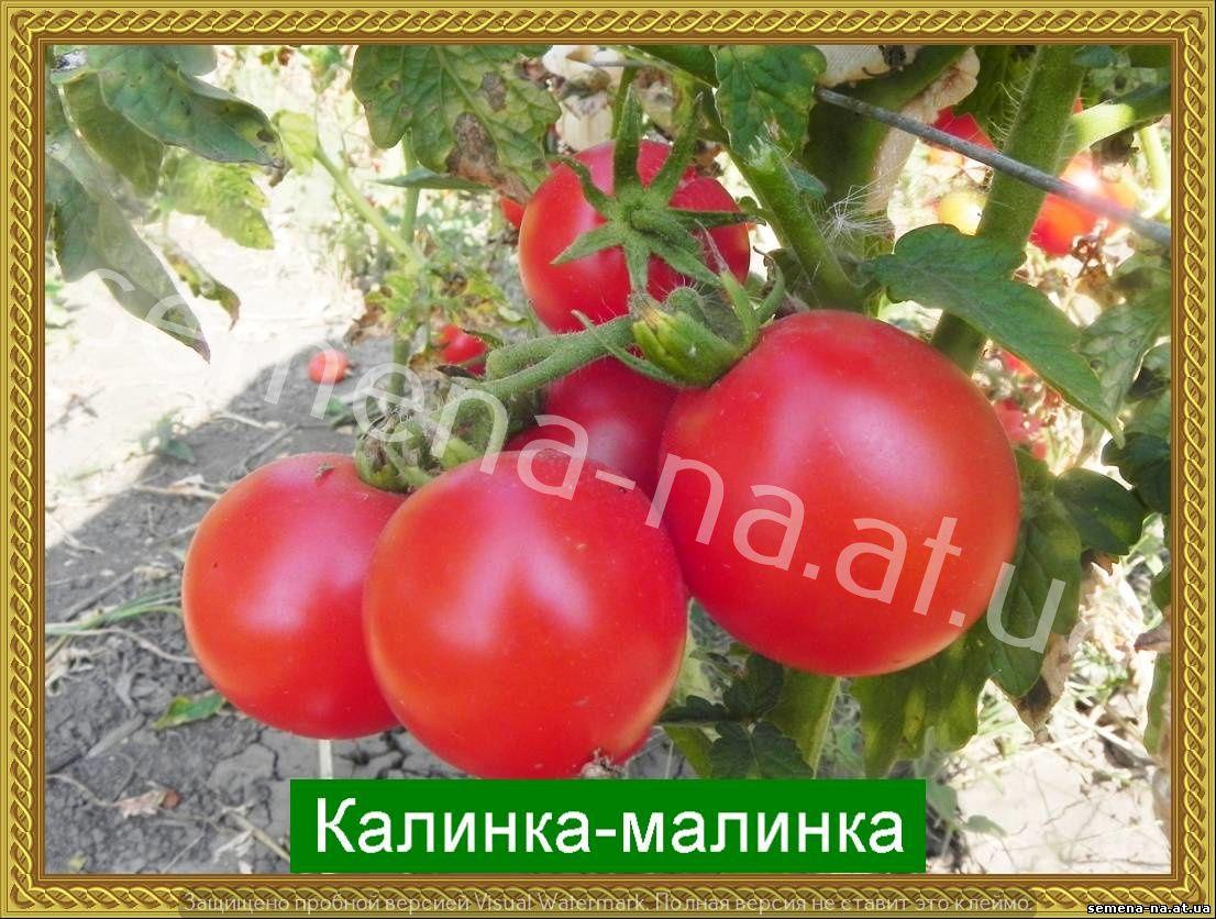 Урожай вкусных помидор без особых хлопот — томат «калинка-малинка»: описание сорта, его достоинства и недостатки