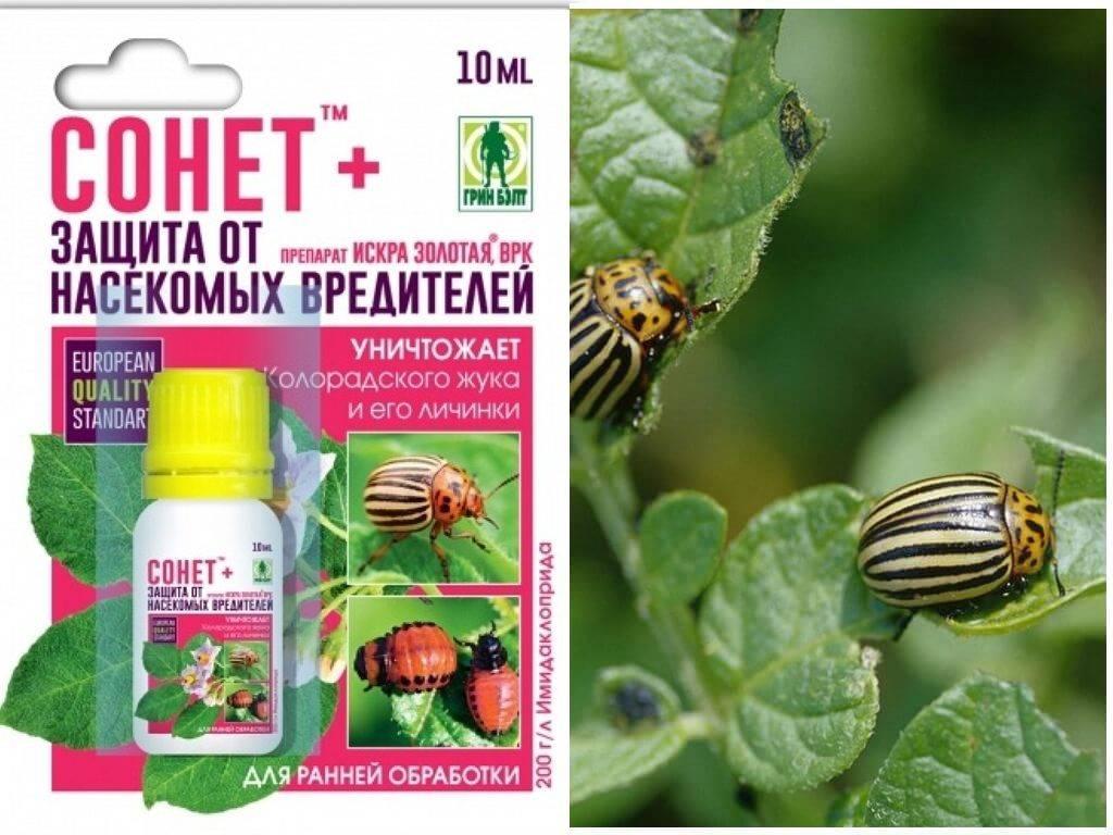 Алатар: инструкция по применению препарата для борьбы с насекомыми