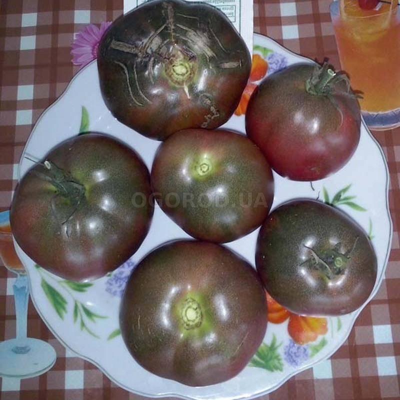 Сорт для настоящих ценителей — великолепный томат «черный барон»
