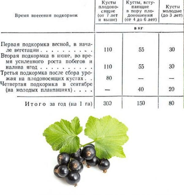 Полив винограда летом или о чем должен знать каждый виноградарь