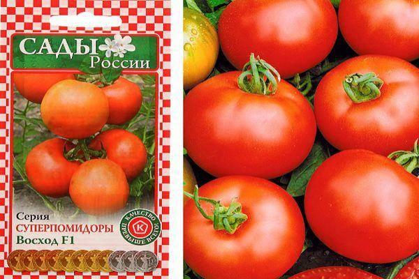 Томат верлиока f1: описание и характеристика гибрида, отзывы и фото тех, кто выращивает сорт
