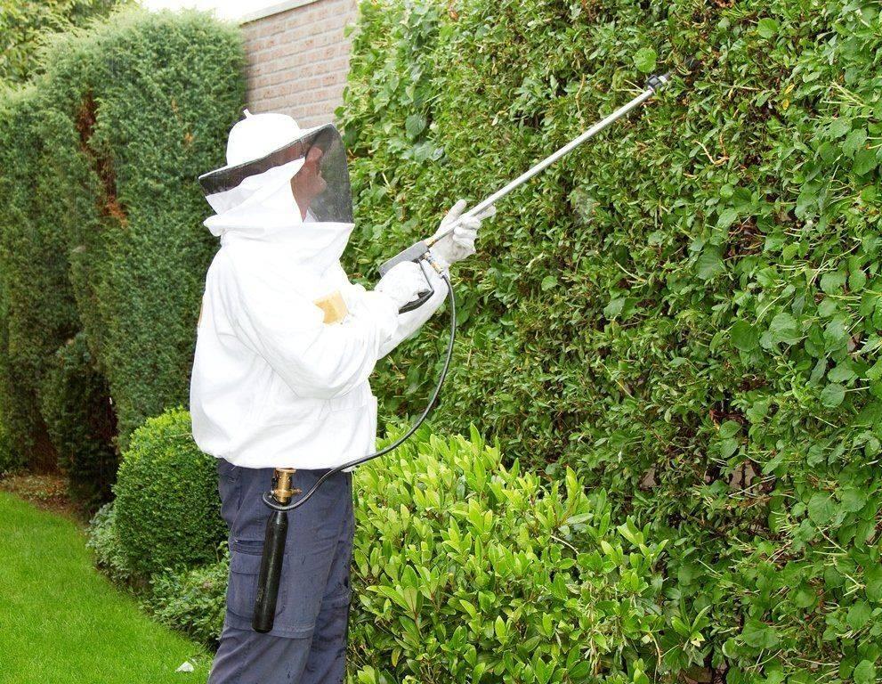 Как избавиться от пчел на даче, участке, в доме, гараже, сарае
