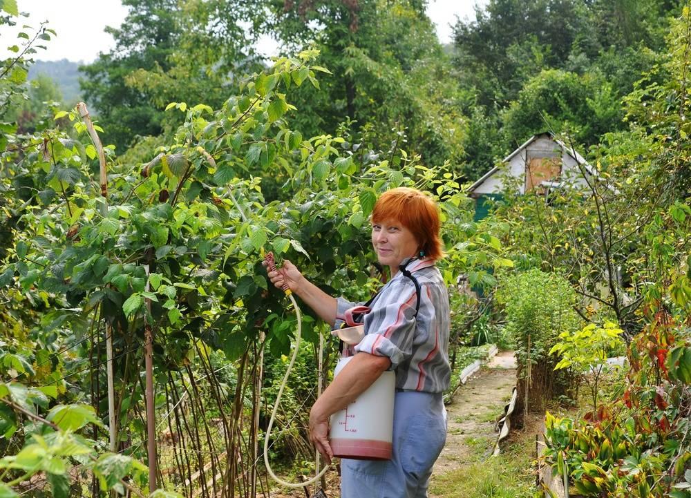 Лучшие подкормки для малины после сбора урожая