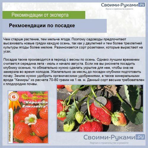 Клубника альбион: подробное описание сорта, правила ухода и варианты размножения клубники