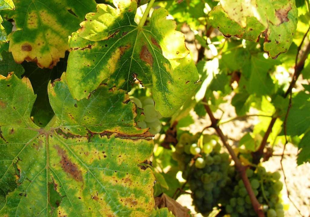 Болезнь кошачьих царапин: причины, симптомы, диагностика, лечение | компетентно о здоровье на ilive