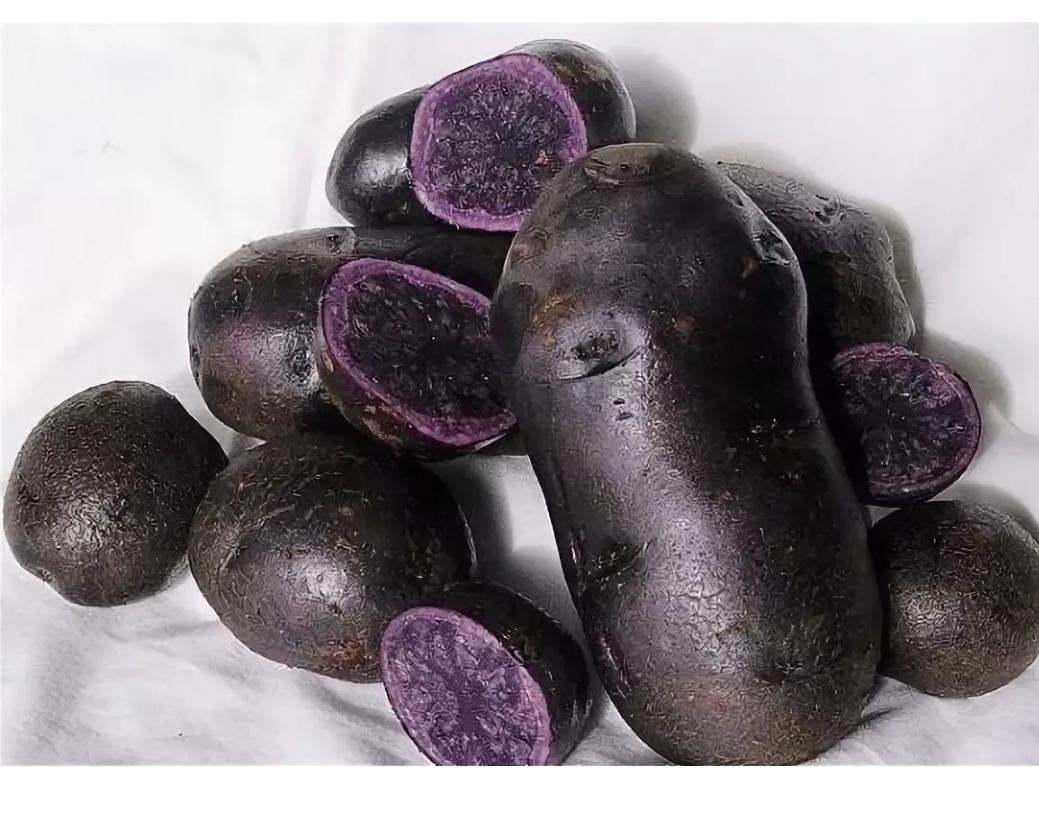 Описание черного картофеля, полезные свойства, сорта, особенности посадки и ухода
