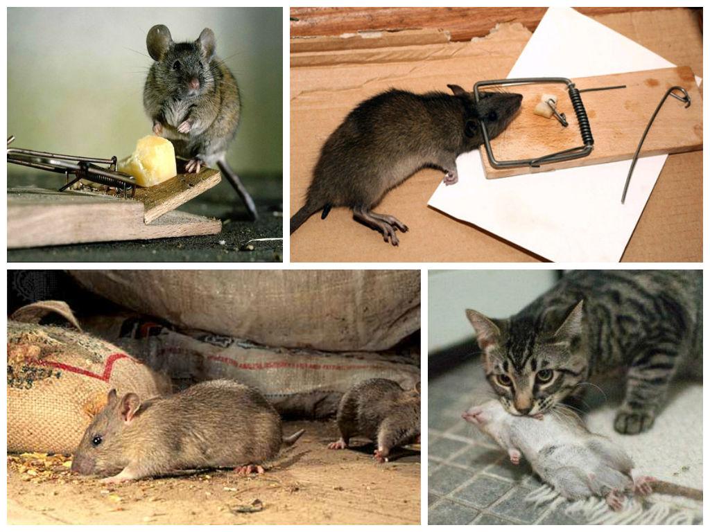 Как бороться с мышами и другими грызунами в каркасном доме
