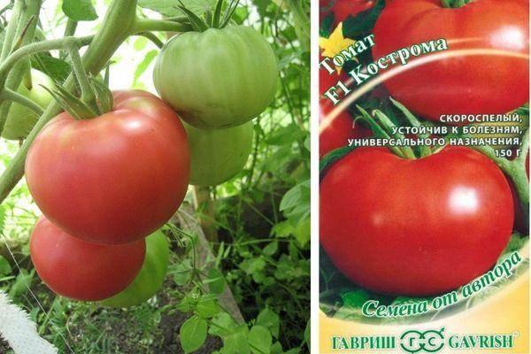 Томат кострома: отзывы, фото, урожайность, описание и характеристика сорта