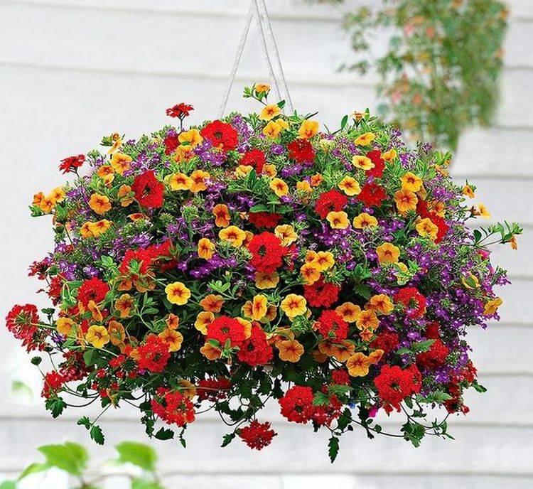 7 лучших красивоцветущих растений для ампельных композиций. фото — ботаничка.ru