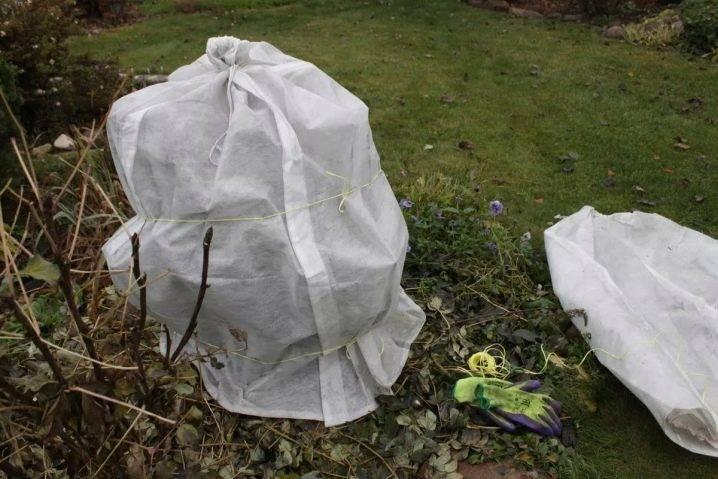 Уход за пионами осенью, правильная подготовка к зиме | заготовки на зиму