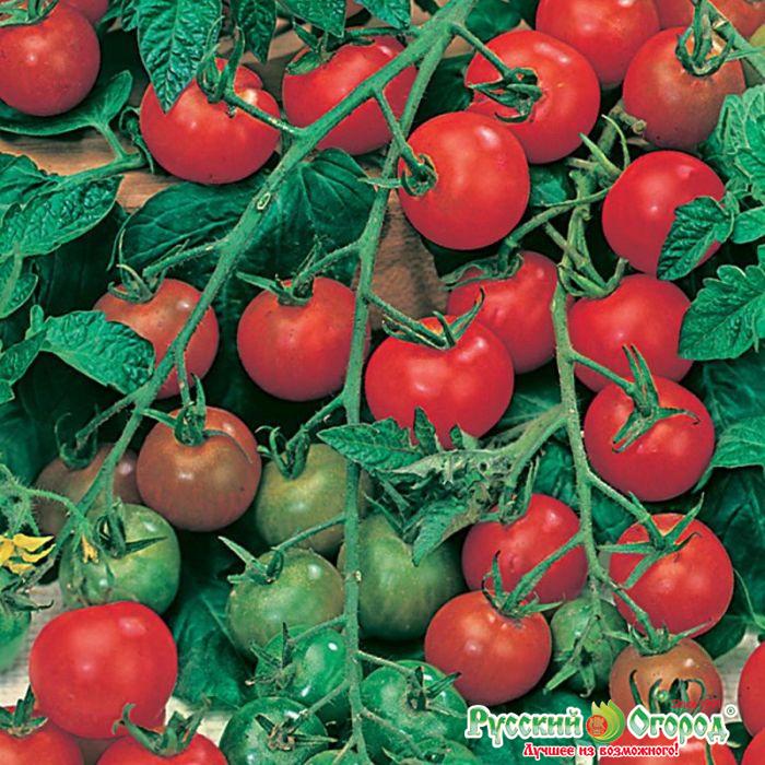 Помидоры для ленивых ленивый способ выращивания помидор опробованный годами с видео