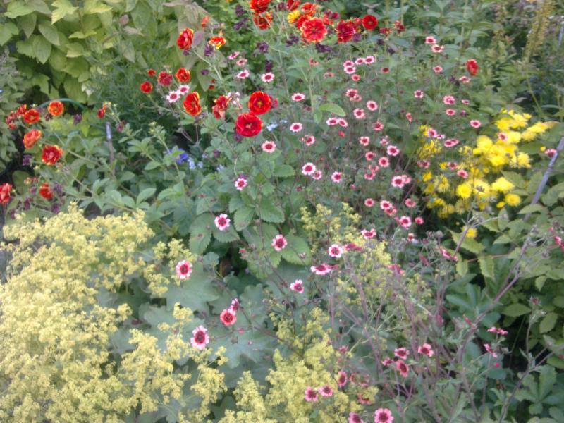 Правила посадки и ухода за лапчаткой в открытом грунте, выращивание и обрезка
