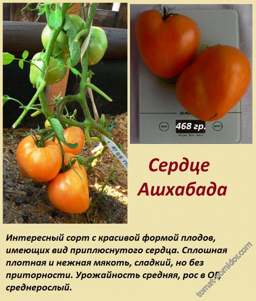 """Томат """"сердце ашхабада"""": описание сорта, характеристики плодов-помидор, рекомендации по уходу и выращиванию"""