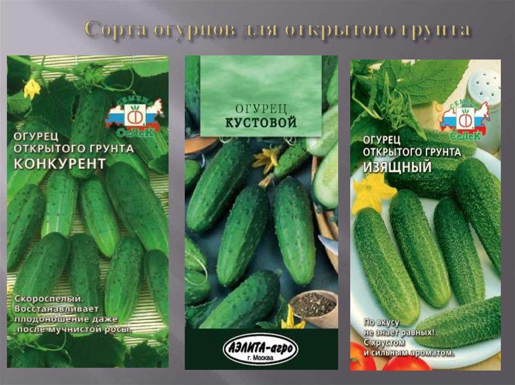 Лучшие засолочные огурцы для открытого грунта и теплиц: выбираем лучшие сорта и гибриды огурцов