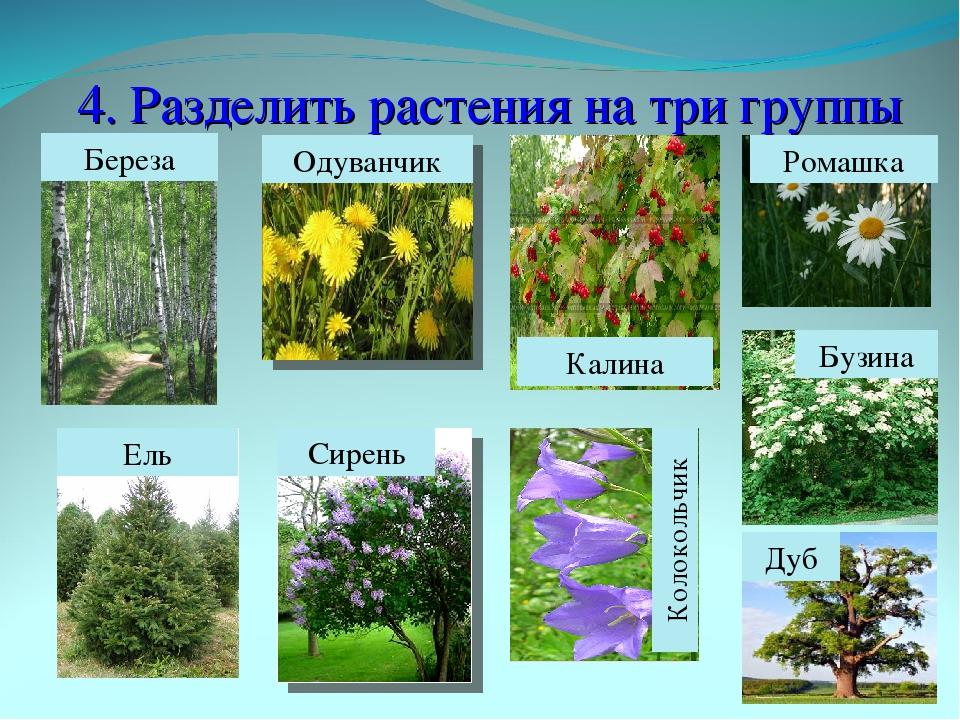 Декоративные деревья и кустарники в ландшафтном дизайне: названия, фото, описание сортов